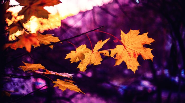 autumn-autumn-leaf-autumn-leaves-371364
